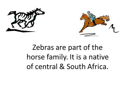 Zebras are part of the horse family. It is a native of central & South Africa.