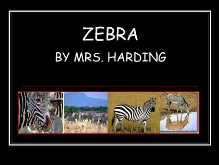 ZEBRA BY MRS. HARDING. APPEARANCE The three different types of zebras have different patterns of black and white stripes. Zebras are similar in shape.