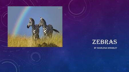 ZEBRAS BY MARLENA WRABLEY. Young zebras are next to their mothers for 1 or 2 years. Female zebras pair when are 2 years old. Zebras are pregnant for 1.
