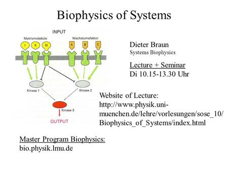 Biophysics of Systems Dieter Braun Systems Biophysics Master Program Biophysics: bio.physik.lmu.de Lecture + Seminar Di 10.15-13.30 Uhr Website of Lecture: