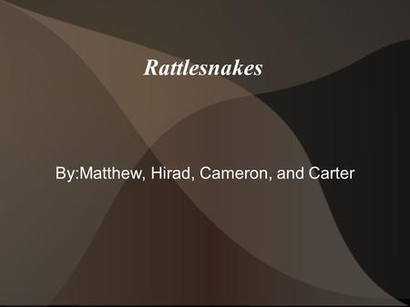 Rattlesnakes By:Matthew, Hirad, Cameron, and Carter.