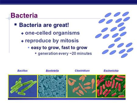 Bacteria  Bacteria are great!  one-celled organisms  reproduce by mitosis  easy to grow, fast to grow  generation every ~20 minutes.