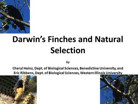 Darwin's Finches and Natural Selection by Cheryl Heinz, Dept. of Biological Sciences, Benedictine University, and Eric Ribbens, Dept. of Biological Sciences,