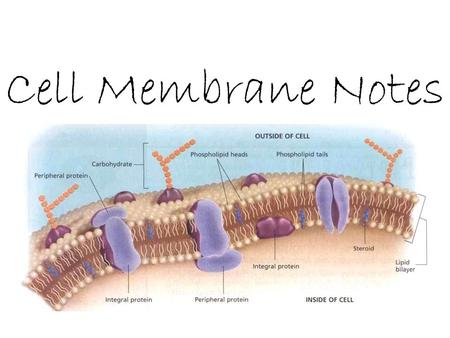 Cell Membrane Notes. Diffusion – particles move from an area of high concentration to low concentration in other words: particles spread out