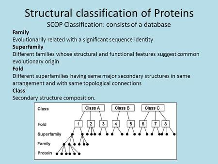 Structural classification of Proteins SCOP Classification: consists of a database Family Evolutionarily related with a significant sequence identity Superfamily.