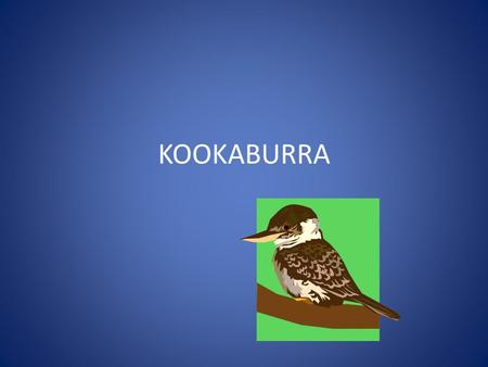 KOOKABURRA. How many centimetres? A Kook is 43 centimetres.