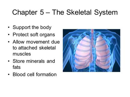 Chapter 5 – The Skeletal System Support the body Protect soft organs Allow movement due to attached skeletal muscles Store minerals and fats Blood cell.