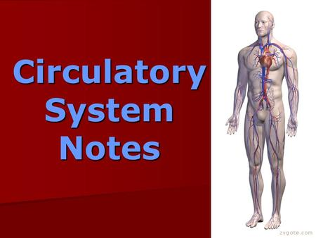 Circulatory System Notes. Functions of the circulatory system… -Carries nutrients, oxygen & other needed materials to cells.