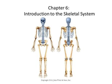 Copyright 2010, John Wiley & Sons, Inc. Chapter 6: Introduction to the Skeletal System.