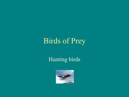 Birds of Prey Hunting birds Types of Birds Falcons Hawks Sea gulls Condors Ravens Eagles.