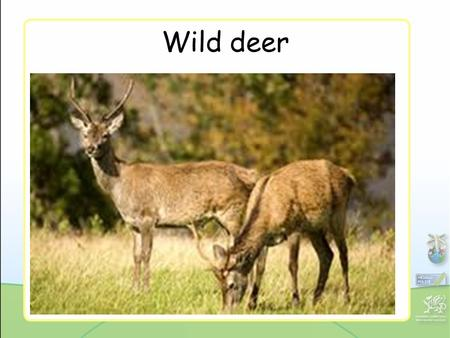 Wild deer. Deer poaching Protected plants Picking protected plants.