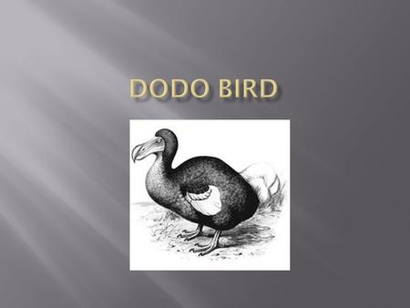  The Dodo bird became extinct in 1681.  Even though it's a bird like the peacock, it's a flightless bird.  It was said that the Dodo bird was the dumbest.