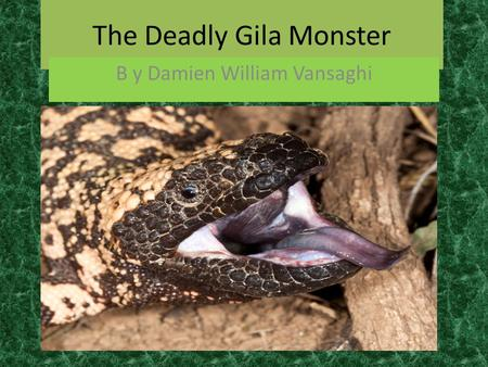 The Deadly Gila Monster B y Damien William Vansaghi.