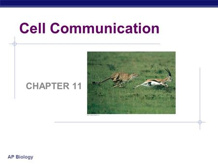 AP Biology Cell Communication CHAPTER 11. Warm-Up 1. Why do you communicate? 2. How do you communicate? 3. How do you think cells communicate? 4. Do you.