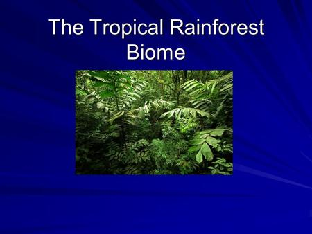 The Tropical Rainforest Biome. Climate The average temperature in a tropical rainforest region would range between 20 and 29 degrees Celsius ( 68 and.