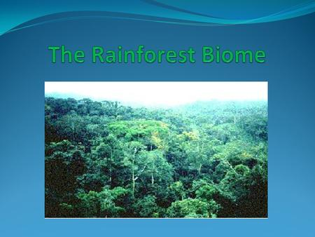The Rainforest Facts It is estimated that rainforest now cover less than 6 % of the earth's surface. Scientist believe that more than half of the world's.