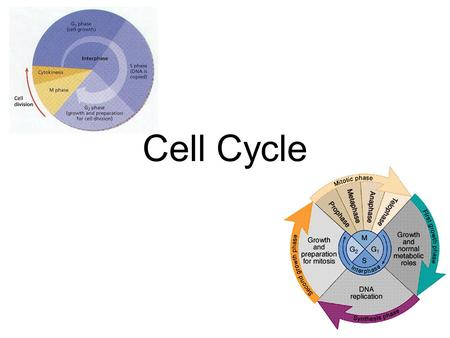 Cell Cycle. Cell Division Functions Reproduction Grow & Develop Renewal & Repair.