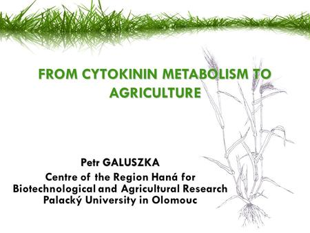 Petr GALUSZKA Centre of the Region Haná for Biotechnological and Agricultural Research Palacký University in Olomouc FROM CYTOKININ METABOLISM TO AGRICULTURE.