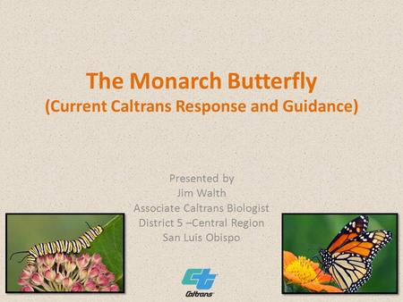 The Monarch Butterfly (Current Caltrans Response and Guidance) Presented by Jim Walth Associate Caltrans Biologist District 5 –Central Region San Luis.