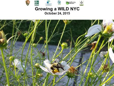 Growing a WILD NYC October 24, 2015. Citizen Science: A Stewardship Opportunity.