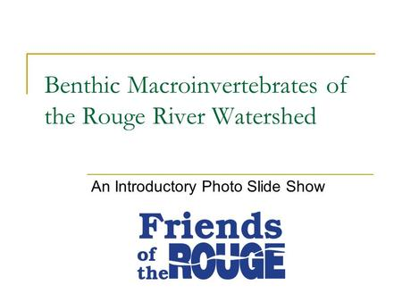 Benthic Macroinvertebrates of the Rouge River Watershed An Introductory Photo Slide Show.