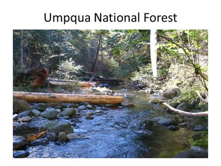 Umpqua National Forest. How we got here Douglas County yesterday Douglas County today.