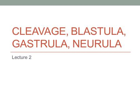 CLEAVAGE, BLASTULA, GASTRULA, NEURULA Lecture 2. Cleavage Mitosis Duplication of cells 1  2  4  8  16  etc. zygote  morula  blastula  gastrula.