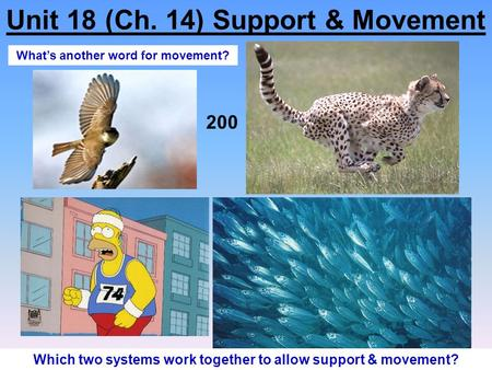 Unit 18 (Ch. 14) Support & Movement