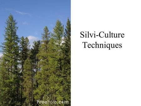 Silvi-Culture Techniques. Clearcutting -establishes and __________________ forests where all of the trees become established at the same time. -Conditions.