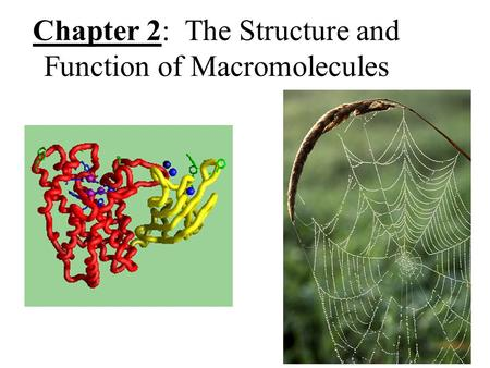 Chapter 2: The Structure and Function of Macromolecules.