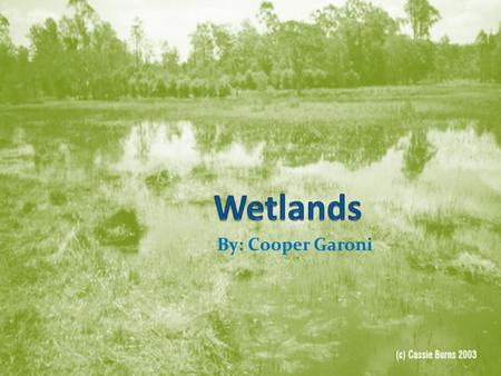 Wetlands By: Cooper Garoni.