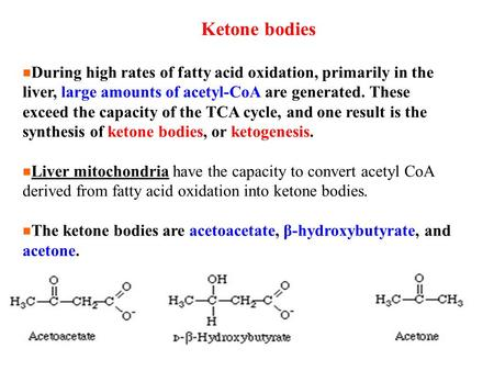 Ketone bodies During high rates of fatty acid oxidation, primarily in the liver, large amounts of acetyl-CoA are generated. These exceed the capacity of.