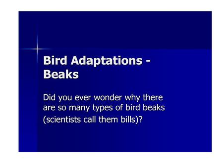 Let's take a look at some birds and the adaptations that help them get the food they need to survive.