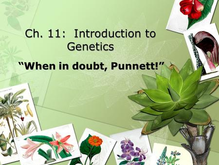 "Ch. 11: Introduction to Genetics ""When in doubt, Punnett!"""