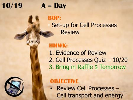 10/19A – Day BOP: Set-up for Cell Processes Review HMWK: 1.Evidence of Review 2.Cell Processes Quiz – 10/20 3.Bring in Raffle $ Tomorrow OBJECTIVE Review.