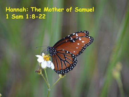 Hannah: The Mother of Samuel 1 Sam 1:8-22. Samuel: Judge and Prophet As the final judge and one of the earliest oral prophets, Samuel was present at most.