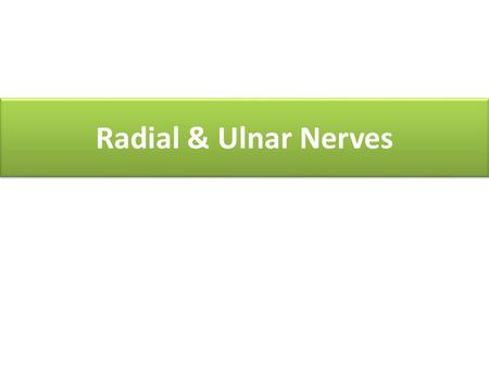 Radial & Ulnar Nerves. At the end of the lecture, students should be able to: At the end of the lecture, students should be able to: Describe the anatomy.