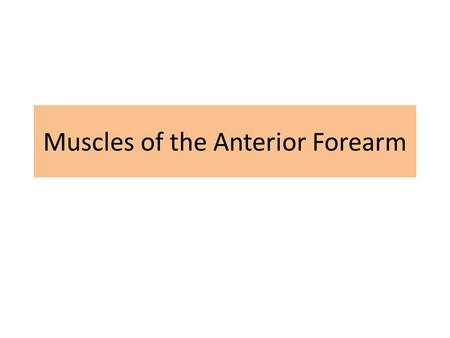 Muscles of the Anterior Forearm. Objectives Name and identify the muscles in the anterior (flexor/pronator) and posterior (extensor/supinator) compartments.