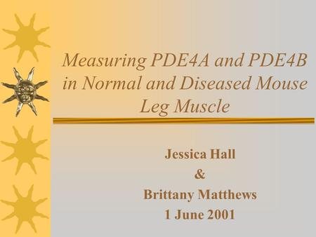 Measuring PDE4A and PDE4B in Normal and Diseased Mouse Leg Muscle Jessica Hall & Brittany Matthews 1 June 2001.
