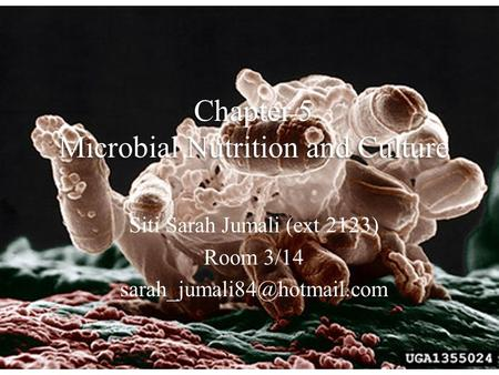 Chapter 5 Microbial Nutrition and Culture Siti Sarah Jumali (ext 2123) Room 3/14