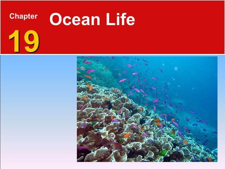 19 Chapter 19 Ocean Life. Life  Living things must do several processes:  Take in and use energy  Grow and develop  Respond to the environment  Excrete.