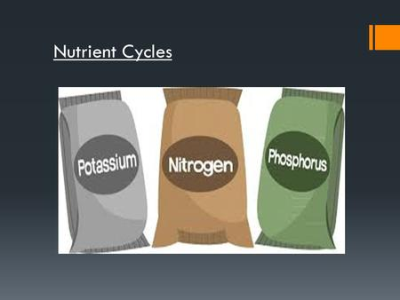 Nutrient Cycles. In this lesson you will be learning about the nutrient cycles that recycle N, P and K. By the end of the lesson you should: Know some.