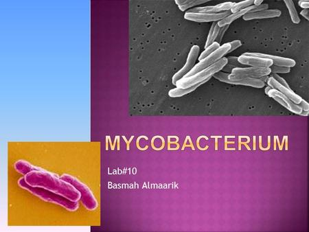 Lab#10 Basmah Almaarik.  It has many species one of them is Mycobacterium tuberculosis that cause TB.  Some other common species seen include:  M.