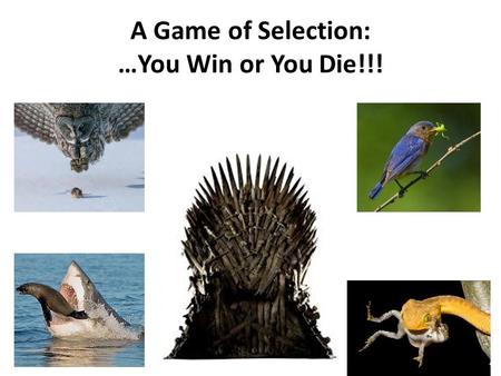 A Game of Selection: …You Win or You Die!!!. Evolution: What does it mean???