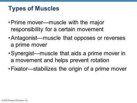 © 2012 Pearson Education, Inc. Types of Muscles Prime mover—muscle with the major responsibility for a certain movement Antagonist—muscle that opposes.