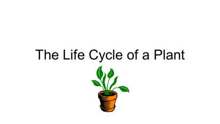 The Life Cycle of a Plant. Your instructions Make a heading in your notebook for The Life Cycle of a Plant. Read each slide together. For each slide,