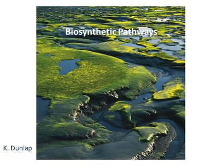Biosynthetic Pathways K. Dunlap. Introduction In most living organisms, the pathways by which a compound is synthesized are usually different from the.
