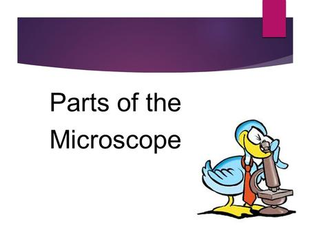 Parts of the Microscope. A microscope is a type of lab equipment that magnifies the image of an object so that small details can be observed. The word.