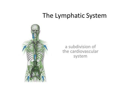 The Lymphatic System a subdivision of the cardiovascular system.