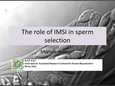 The role of IMSI in sperm selection Monica Antinori R.A.P. R.U.I International Associated Research Institute for Human Reproduction Rome, Italy.